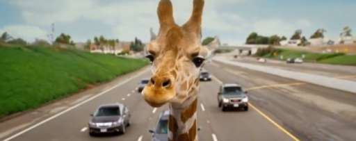 "Play ""The Hangover Part III"" Giraffe Or Duck Video Game"