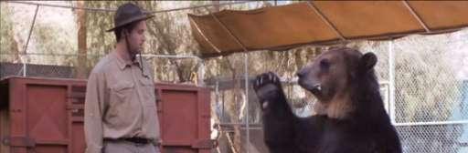 Viral Video: T.J. Miller Auditions for Yogi Bear