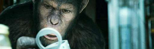 """A New App Asks """"Are You Smarter Than An Ape?"""""""